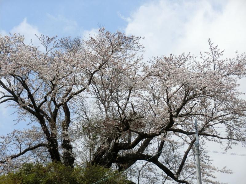 Photo_430