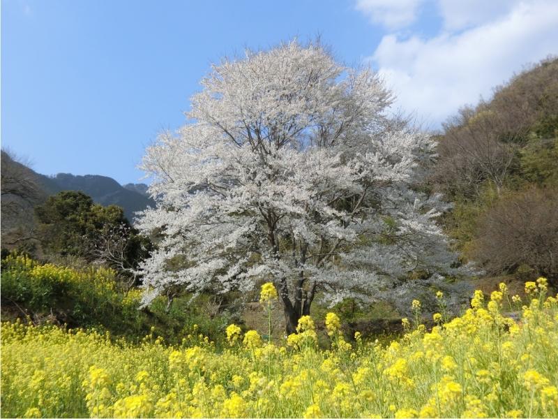 Photo_453